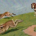 Politicienii romani alearga dupa doi iepuri. O vanatoare de mare risc pentru tara!